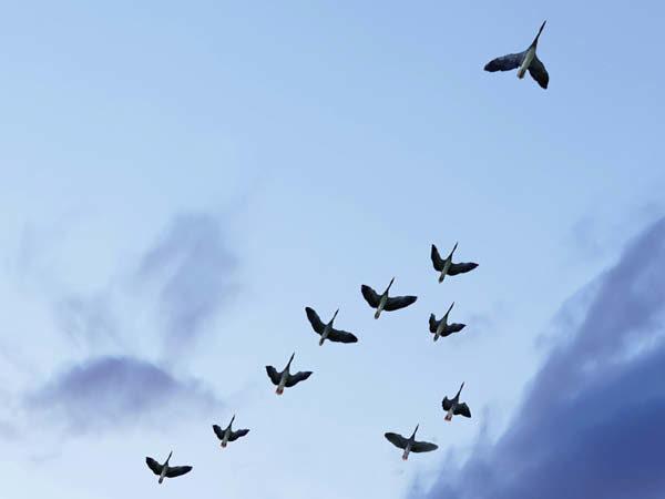 Handlekraftige ledere – med tvivlen som følgesvend