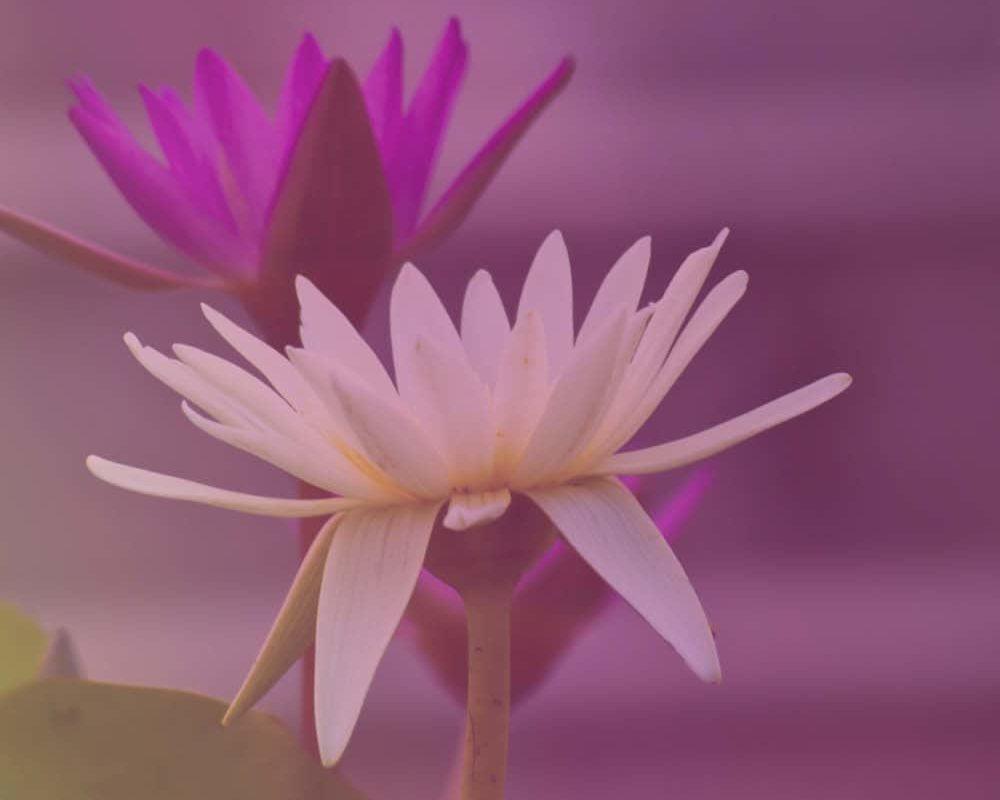 Webgrafik_Kognitivbaseret_Mindfulness5