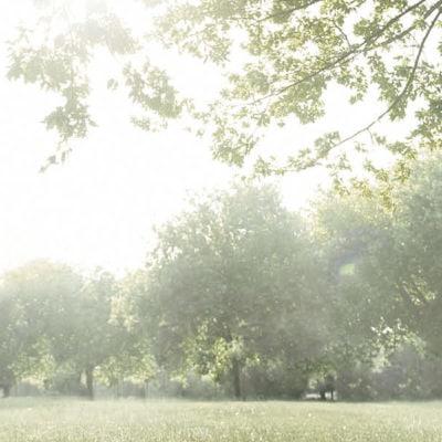 Overbygning i mindfulnessbaseret naturterapi