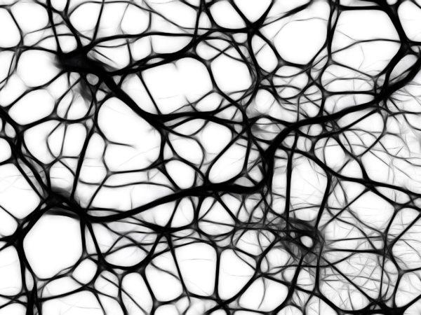 Ramt af frygt – hvad sker der i hjernen, og hvordan får vi roen tilbage?
