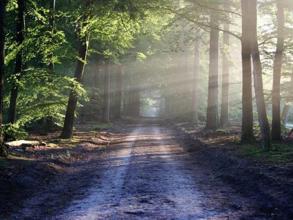 Naturterapi kan hjælpe psykisk sårbare borgere